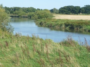 The Arun looking upstream, below Greatham Bridge